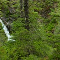 The bottom drop of Hamma Hamma Falls can be seen through the trees along the river bank.- Winter in Olympic National Park
