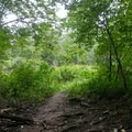 Emerging from the mixed hardwood forest to the old railroad bed in a small meadow.- Finger Lakes Trail: Mitchellsville Gorge