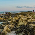 Beachgoers sift through the tide pools at Higgins Beach.- An Adventure Guide to the Maine Coast