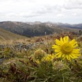 Wildflowers on the CCY Route.- Climb a Mountain