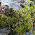 Lush groundcover along the Wind Mountain hike.- A 3-Day Winter Itinerary in Hood River, Oregon