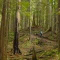 Winding through the woods at Mount Seymour.- Mountain Biking in British Columbia