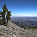Wind-sculpted trees cling to a stoney landscape on Mount Baldy.- 12 Great Summit Hikes Near Los Angeles