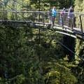 Capilano Suspension Bridge Park.- 7 Days of Adventure out of North Vancouver, B.C.
