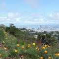 Downtown San Francisco seen from Mount Davidson.- City Parks You Definitely Need to Visit