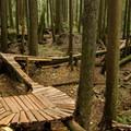 Original old-school tree trails on Digger.- Mountain Biking in British Columbia