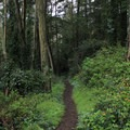 Lush, green trails on Mount Davidson.- Adventure in the City: San Francisco
