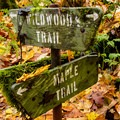 Forest Park's Maple Trail is a great place to see fall foliage within Portland.- Oregon Fall Adventures