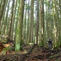 Toadstool has some steep and technical sections.- Mountain Biking in British Columbia