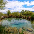 Longstreet Spring in Ash Meadows National Wildlife Refuge.- 10 Great Adventures Near Las Vegas