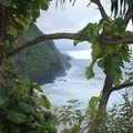 View through the vegetation to the Napali Coast on the Kalaulau Trail.- American Rainforests You Need to See