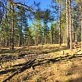 A mountain biker enjoys Bend's Phil's Trail complex.- Oregon Fall Adventures