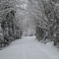Trail though the forest on the way to Kelcema Lake.- Amazing Snowshoe Trails in Washington