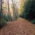 The old railroad bed now serves as the trail.- Middle Prong Trail