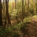The wide trail was once a railroad bed.- Big Creek Trail to Mouse Creek Falls