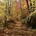 An autumn color paradise.- Big Creek Trail to Mouse Creek Falls