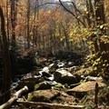 Every shade of orange and red adorn the various species of trees lining the creek.- Big Creek Trail to Mouse Creek Falls