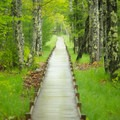 The long boardwalk of Jesup Path.- Acadia National Park