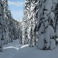 Lanham Lake Trail corridor.- Amazing Snowshoe Trails in Washington