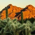Cholla cactus and the sunset light on the mountains.- Delight in the Diversity of Deserts