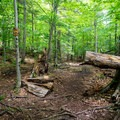 The trail is well worn and well marked.- 15 Must-see Fall Foliage Adirondack Adventures