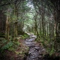 A hike to the LeConte Lodge is truly a wonderful way to really experience the essence of the Smokies. - LeConte Lodge
