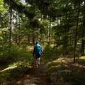 Shady path on Beech Cliff Trail. - Acadia National Park