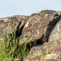 The petroglyphs at Signal Hill are very well preserved and easy to reach.- Delight in the Diversity of Deserts