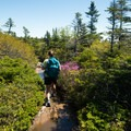 Wildflowers bloom in the final stretch before the summit.- Cadillac Mountain South Ridge Trail