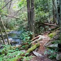 The Cumberland Trail is filled with spots to escape for a bit. Hang a hammock, take a swim, or explore the area.- Hidden Gems in Tennessee's Beautiful State Parks