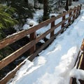 Entering the old-growth forest on the way to the Big Four Ice Caves.- Amazing Snowshoe Trails in Washington