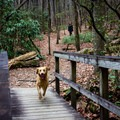 The dog-friendly trail encourages leashes, but they are not required. - Yellow Branch Falls