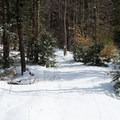 The well-groomed trails at Smuggler's Notch Nordic Center in Vermont offer an easy, carefree snowshoe or skiing adventure the whole family can enjoy.- 8 Winter Adventures in New England Perfect for the Whole Family
