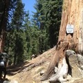 Entering the Trinity Alps Wilderness.- Hiking in the Trinity Alps