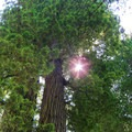 View into the redwoods.- Exploring California's 9 National Parks