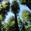 A view into the redwoods.- Our Ultimate West Coast Road Trip