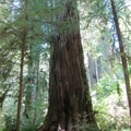 Jedidiah Smith Redwoods State Park.- Northern California Winter Road Trip