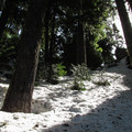 Young and old firs getting some sun on Mount Margaret.- Winter Retreat at Snoqualmie Pass