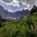 A riot of wildflowers by Iceberg Lake.- Iceberg Lake