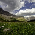 Wildflowers along the trail.- Iceberg Lake