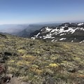 Wildflowers adorn the summit grasslands.- Steens Mountain Summit Trail