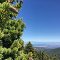 Foxtail Pine and the view toward the Sacramento Valley.- Examining The Sacramento Watershed: The Conservation
