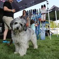 Deviation's mascot stealing the attention at Bend's Block Party. - Outdoor Project's 2017 Block Party Recap