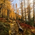 The trail along Perfection Lake with vibrant fall colors.- Enchantment Lakes Thru-Hike