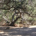A campsite on A Loop (1-28) at El Capitan State Beach.- Best of Santa Barbara: Beaches, Camping, Parks, and Trails