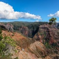 View of the Wimea Canyon.- Pu'u Hinahina Lookout