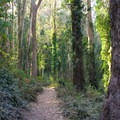 Historic Trail in Sutro Forest.- Adventure in the City: San Francisco