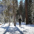 The cross-country ski trail at Donner Memorial State Park is relatively level, making this adventure appropriate for all ability levels.- 5 Reasons to Visit Truckee in the Winter