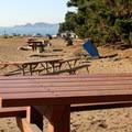 Picnic areas behind Baker Beach.- Beat the Heat: 20 Summer Escapes Near San Francisco