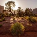 Valley vegetation.- Monument Valley Navajo Tribal Park